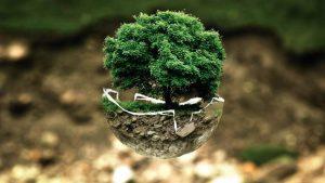 aarde, boom, healing, zuivering