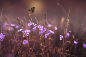 magisch, Lichtwezen, puurheid