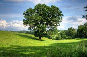 eik, oak, deva, natuurwezen