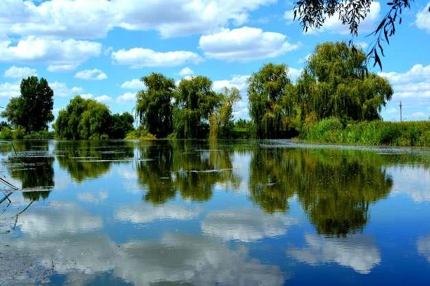 Wilgenboom met deva en water energie