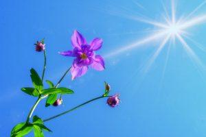 Zonnekracht en deva van bloem