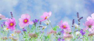 bloemen, natuur, deva