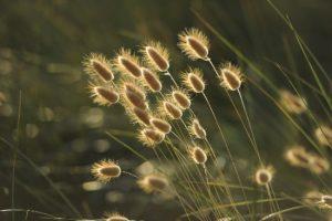 natuurwezens, samenzijn